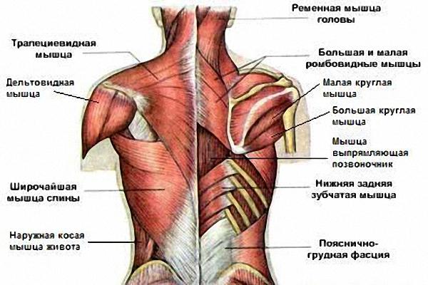 кличко фото мышцы