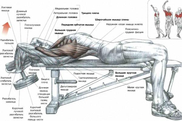 Как накачать толщину спины