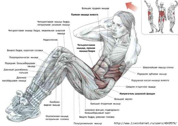 Схема мышц №6